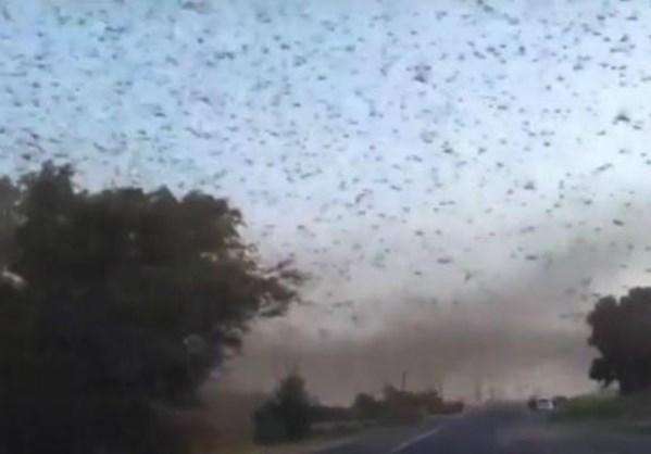 Αποκαλυπτικό βίντεο από τη Ρωσία: Τεράστιο σμήνος από ακρίδες